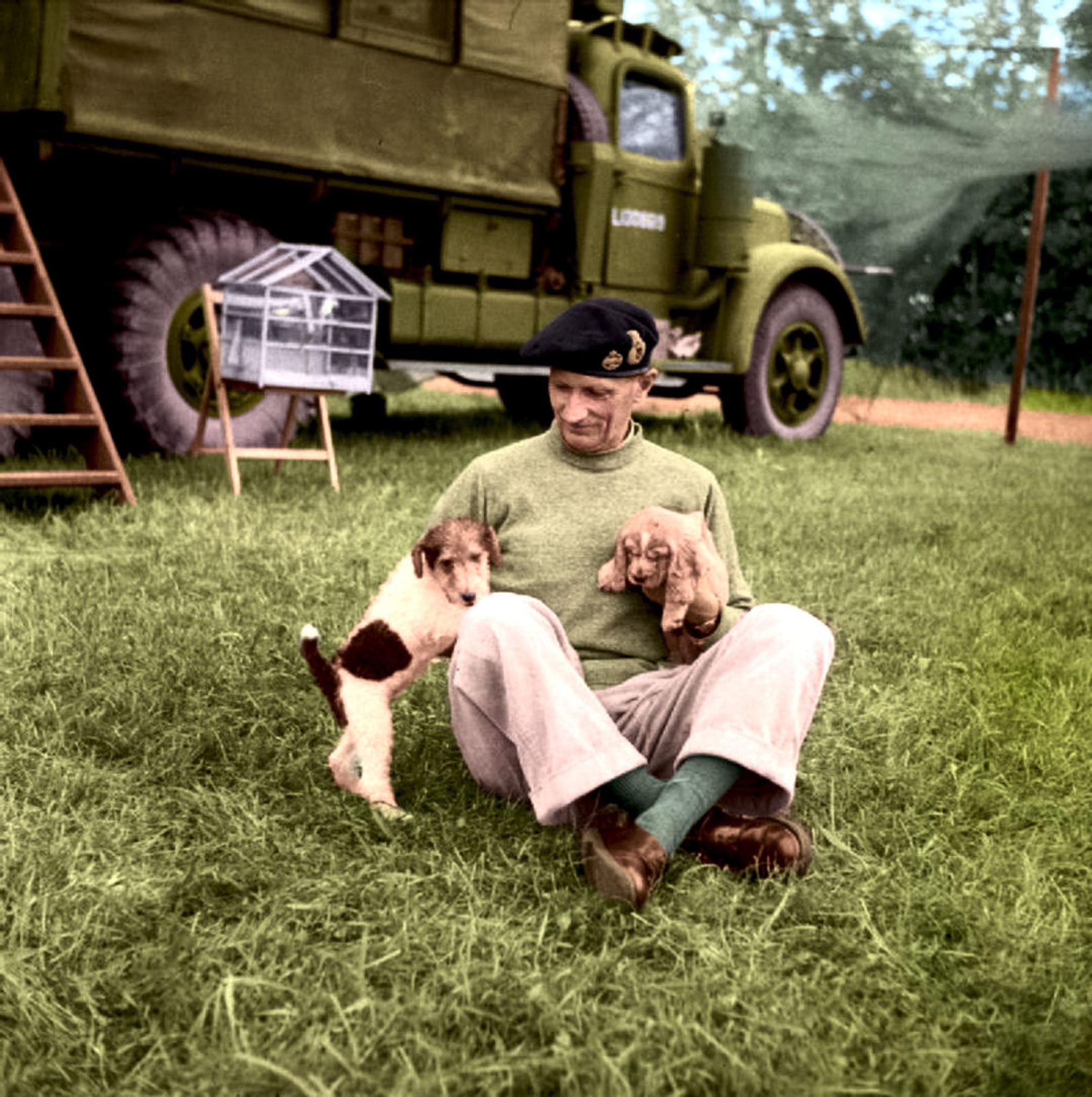 Animals_in_War_1939-1945