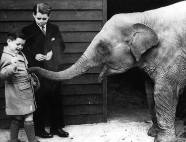 Ted_Bobby_at_the_Zoo._V232111554_